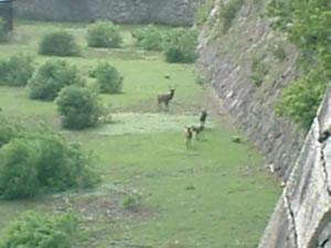 050907名古屋城:お堀の鹿