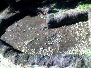 090201 品川区側の大森貝塚4