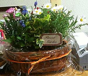 100506 母の日向けの花々
